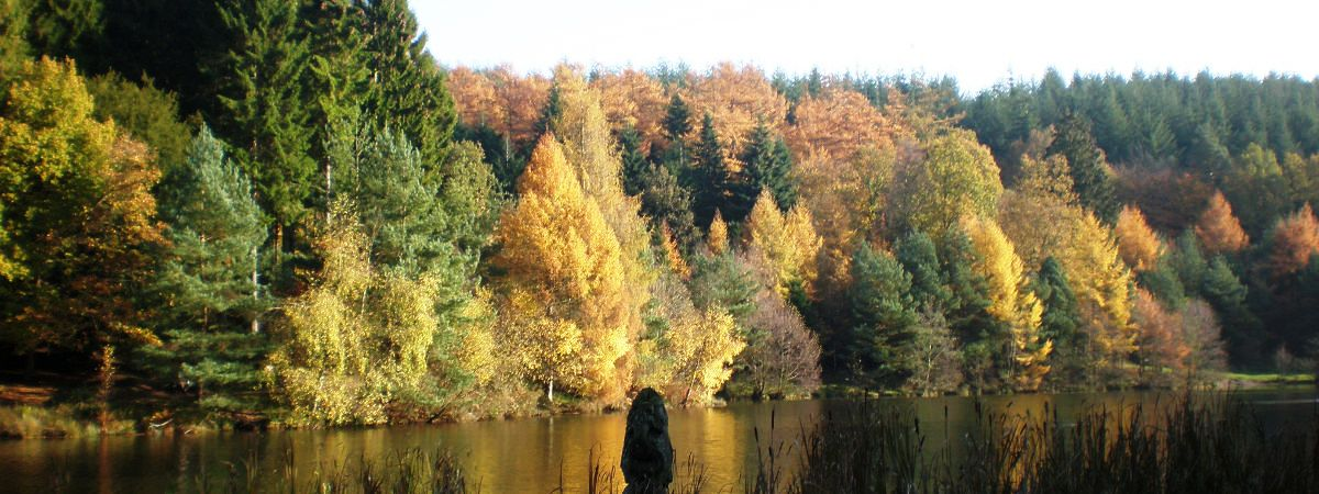 Autumn forays in the Forest of Dean