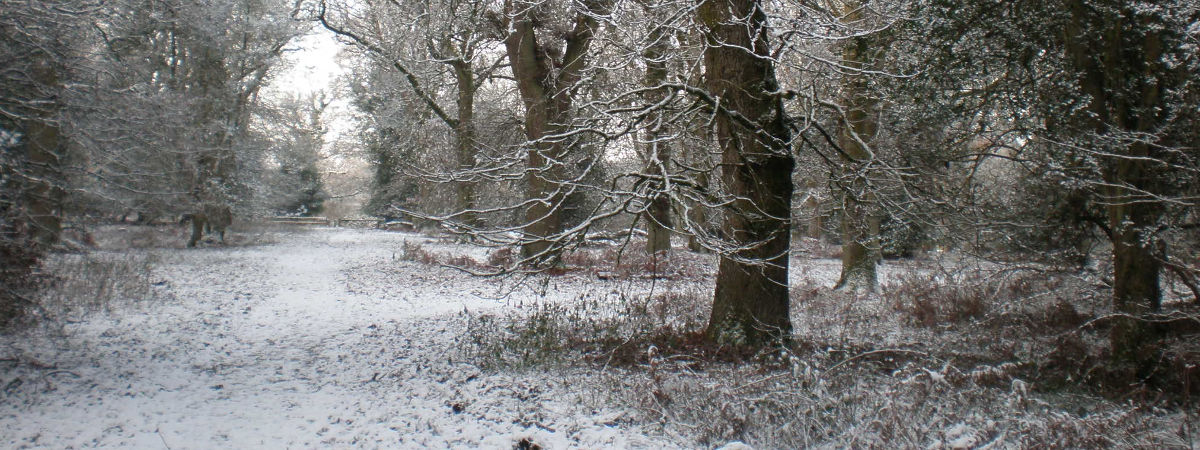 Winter forays in the Forest of Dean